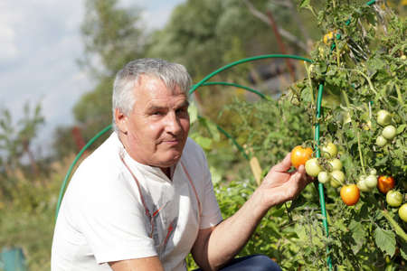 The man poses with tomato plants in the garden photo