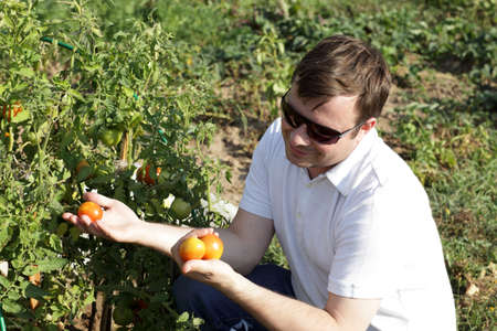 The man holds tomatoes in the garden photo