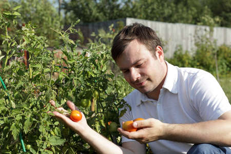 It is portrait of man with tomatoes in the garden photo