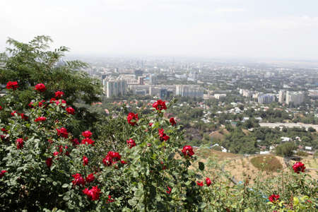 Skyline Almaty and red roses, Southern Kazakhstan photo
