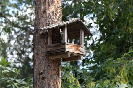 affixed: Feeder bird affixed to a tree trunk Stock Photo