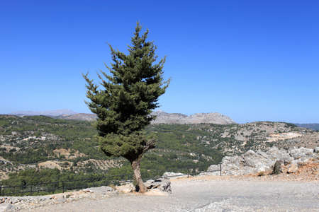 Single tree in summer, Rhodes island, Greece Stock Photo - 16482404