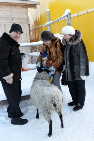 Family is feeding sheep on a farm in winter, Tyumen, Russia Stock Photo - 17534682