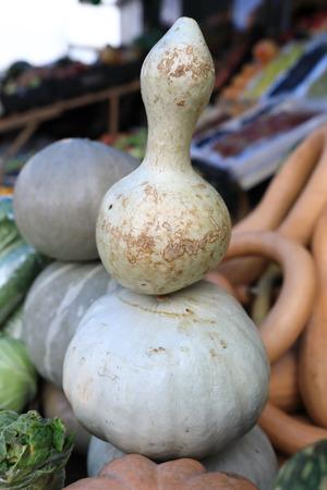 View of fancy pumpkin on the market