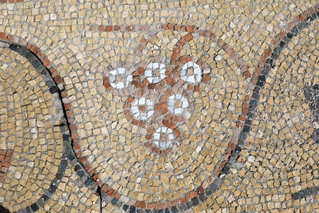 Antique floor mosaic with pattern of grapes in Chersonese
