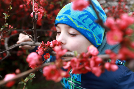 Boy sniffs red flowers of apple in spring