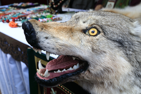 Stuffed wolf head with yellow eyes outdoor Stock Photo
