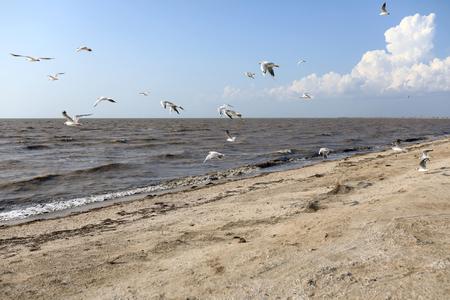 Seagulls over Sea of Azov in summer