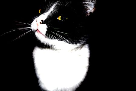 portrait of a cat in a dark room Stock Photo - 4329022