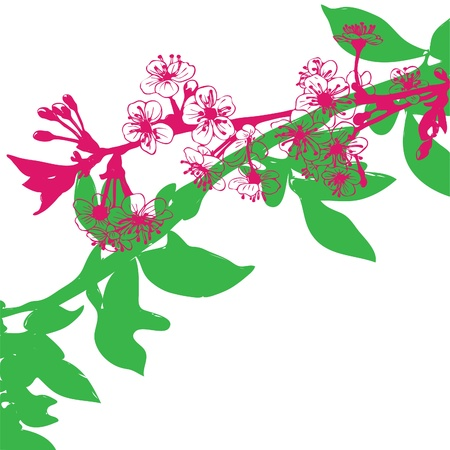 Vector illustration, asian cherry blossom tree.  Vector
