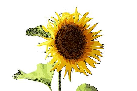 summer day: ilustraci�n vectorial hermoso girasol brillante flor brillante d�a de verano