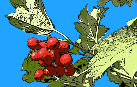 viburnum: vector illustration bunch of red viburnum berries against the sky