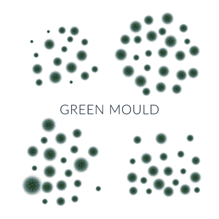 Green mold isolated on white background.Vector illustration. EPS 10