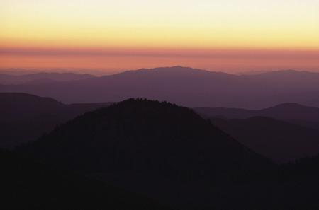 repeated: Bristlecone Pines California, USA