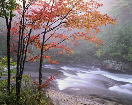 Oxtongue River and Trees in Autumn Muskoka Area, Ontario, Canada