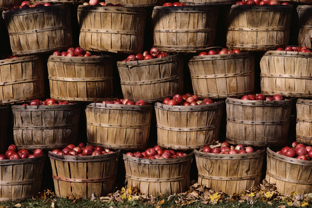 Apple Bushels LANG_EVOIMAGES