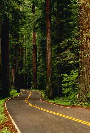 curve road: Road Through Forest Grizzly Creek Redwoods State Park California, USA