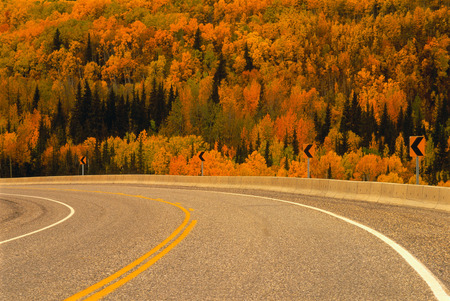 curve road: Road in Autumn