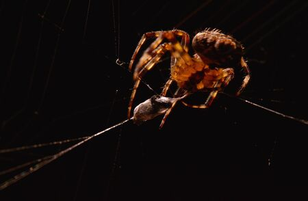 Close-Up of Spider Eating Prey