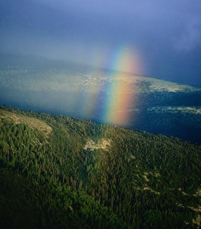 Rainbow Above Trees, Alaska, USA LANG_EVOIMAGES