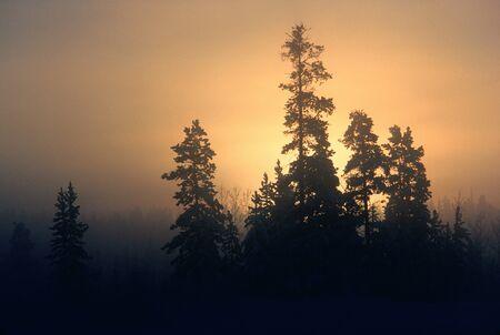 Ice Fog, Yukon, Canada