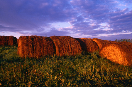 end of a long day: Bales of Hay at Sunrise, Alberta, Canada