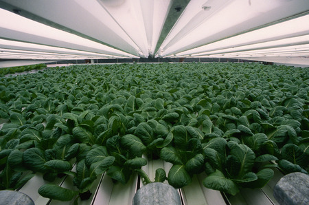repeated: Hydroponics, Spruce Grove, Alberta, Canada LANG_EVOIMAGES