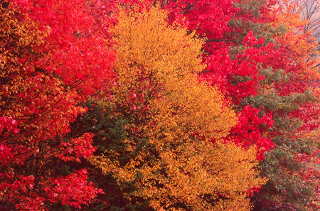 Trees in Fall, Kingston, New Brunswick, Canada LANG_EVOIMAGES