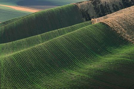 repeated: Fields near Colfax, Washington, USA