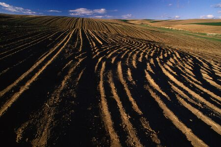 Furrowed Field near Waterville, Washington, USA