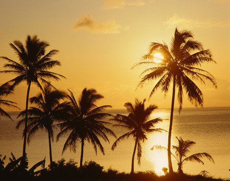 Sunset over Palm Trees, Oahu, Hawaii, USA LANG_EVOIMAGES
