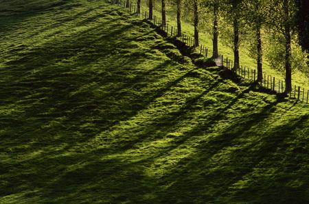 non: Treeline near Taupo, North Island, New Zealand