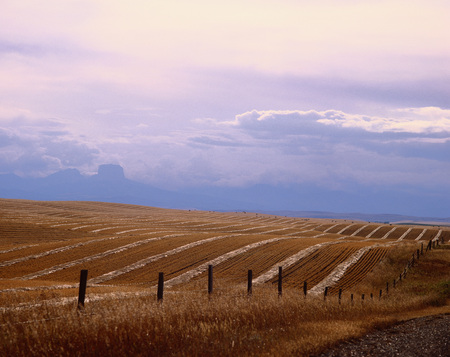 barbed wire fence: Wheat Field, Foothills of Waterton Lakes National Park, Alberta, Canada
