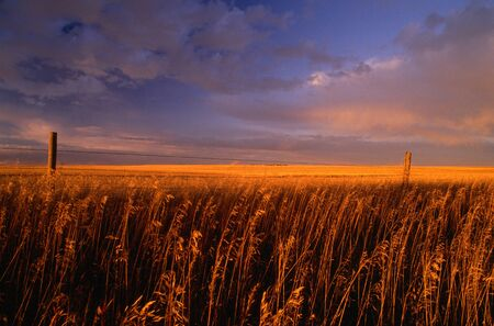 end of a long day: Sunset, Southern Alberta, Canada LANG_EVOIMAGES