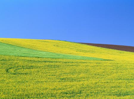 non: Farmland near Walla Walla, Washington, USA