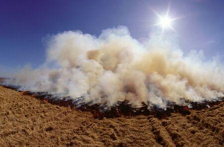 non: Rice Field Burn Off