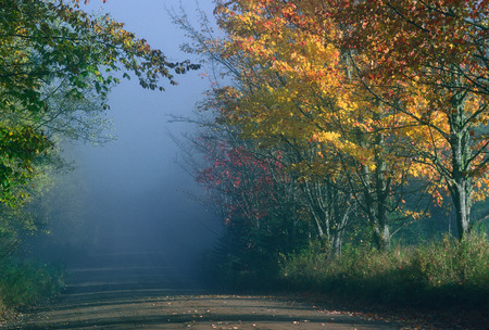 Tree Lined Road, Kingston Peninsula, New Brunswick, Canada