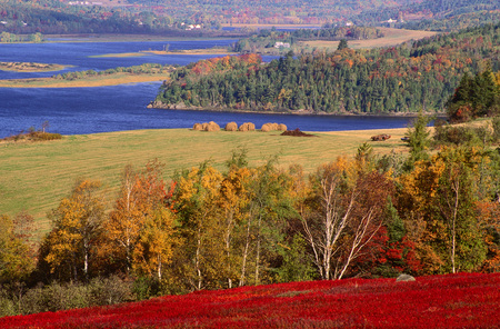 Blueberry Field in Autumn, Kingston Creek, New Brunswick, Canada LANG_EVOIMAGES