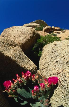 East Mojave National Scenic Area, California, USA