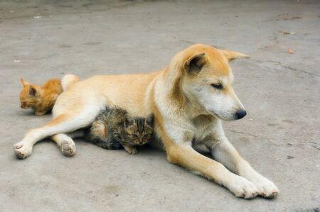 felid: Dog and Kittens, Yangshuo, Guangxi Province, China
