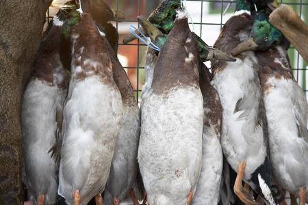 Ducks For Sale, Borough Market, London, England