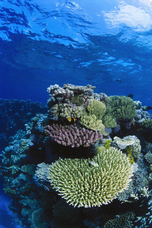 barrier: Great Barrier Reef, Australia