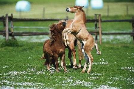 domestication: Horses