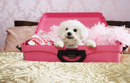 Dog Inside Suitcase