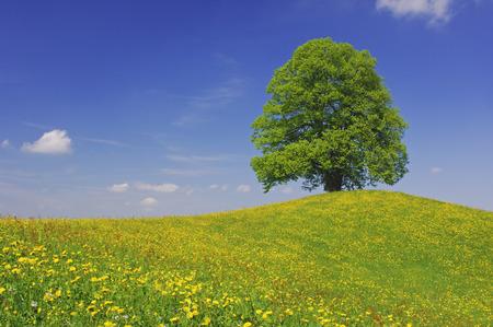 Tree on Hill, Canton of Zurich, Switzerland