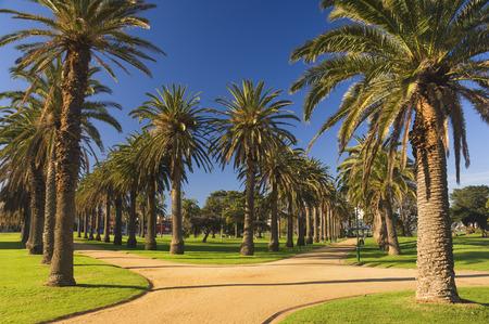 st kilda: Palm Trees, St Kilda, Melbourne, Victoria, Australia