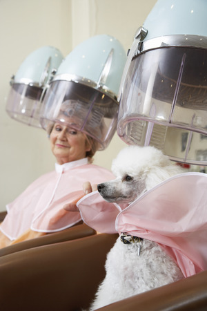 hairdryer: Woman and Poodle at Hair Salon