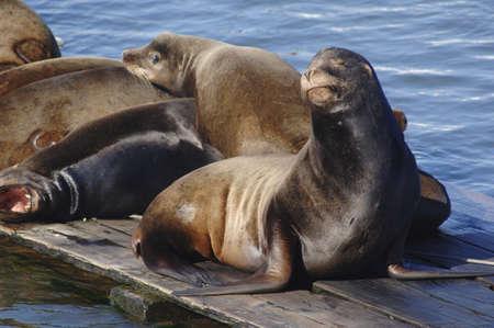 basking: Seals Sunning Themselves LANG_EVOIMAGES