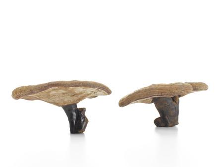 petrified: Petrified Mushrooms