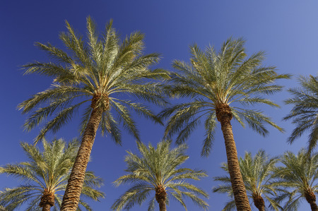 palm trees las vegas nevada usa stock photo picture and royalty